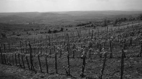 vinarija raj 24